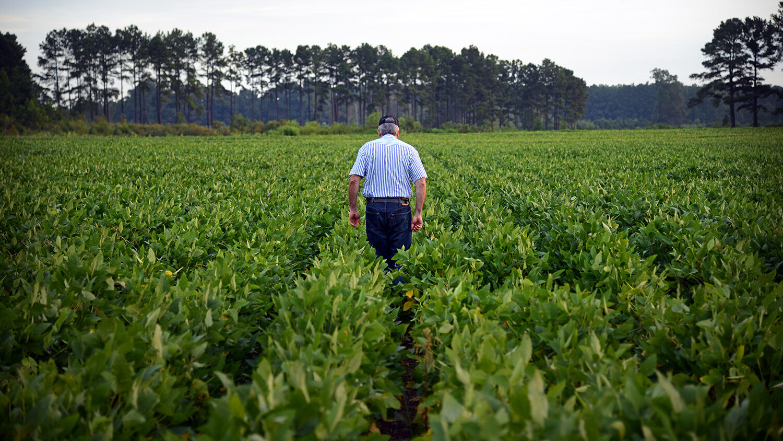 A farmer walks through a line of crops.
