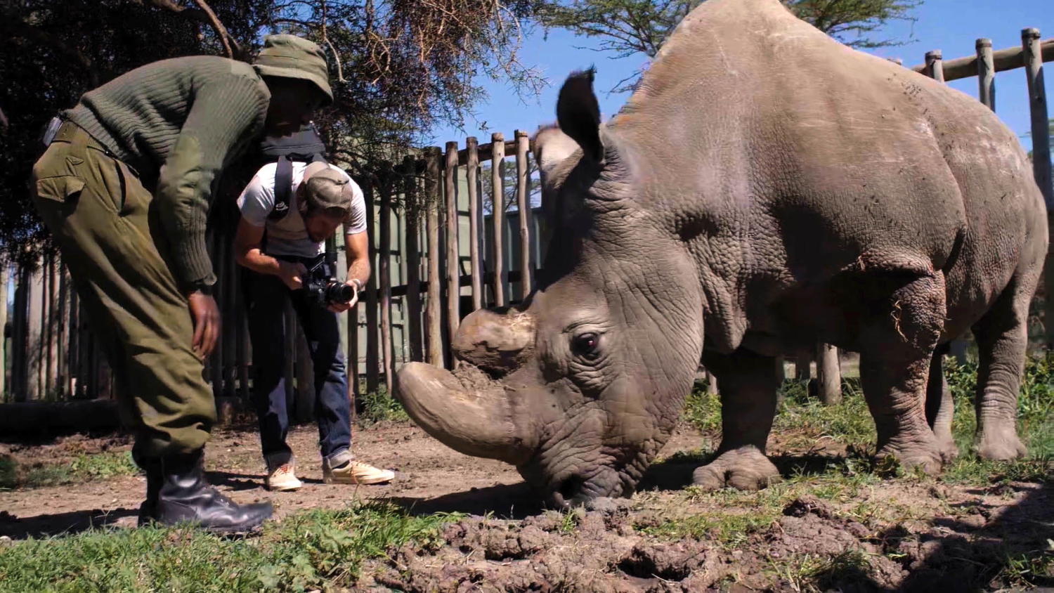 A videographer and an animal caretaker stand next to a rhino