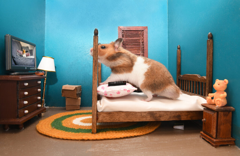 hamster watching fake tv while sitting on bed